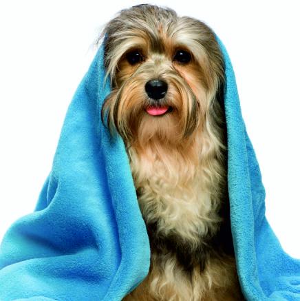 detergenza cane